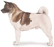 Akita, a Medium Utility  Dog Breed