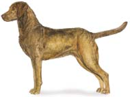 Chesapeake Bay Retriever, a Large Gun  Dog Breed