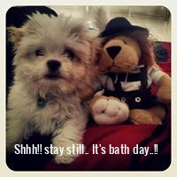 Shhh!! stay still.. It's bath day..!!