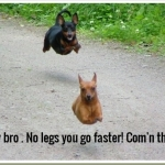 Caption Competition - Hey bro . No legs you go faster! Com'n thru..