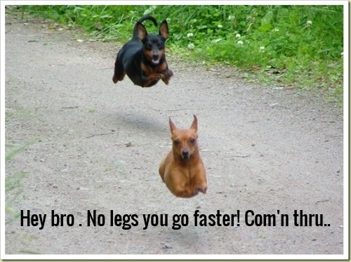 Hey bro . No legs you go faster! Com'n thru..
