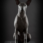 Xoloitzcuintle... pronounce that!