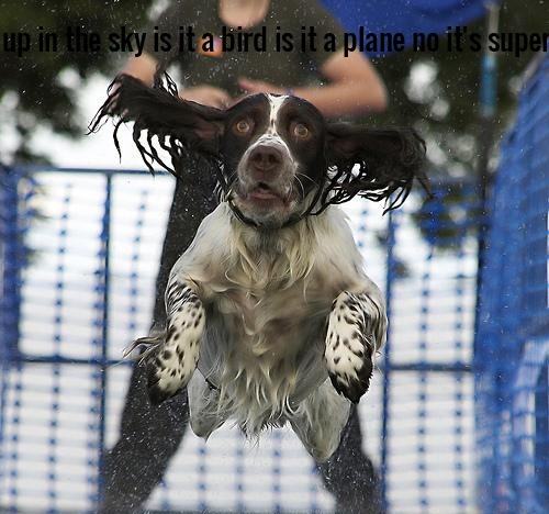 Look up in the sky is it a bird is it a plane no it's super dog