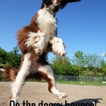 Do the doggy bounce!
